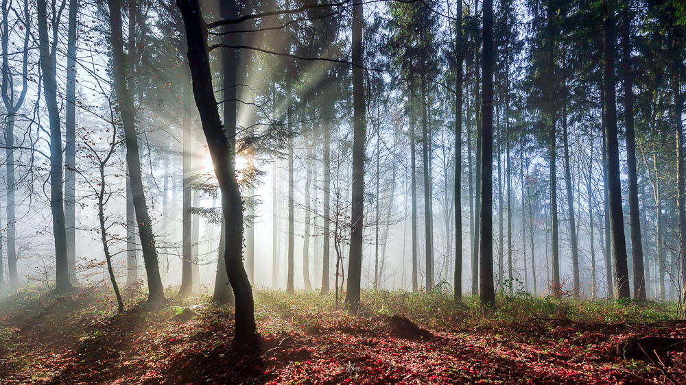 Sunrise at the forest