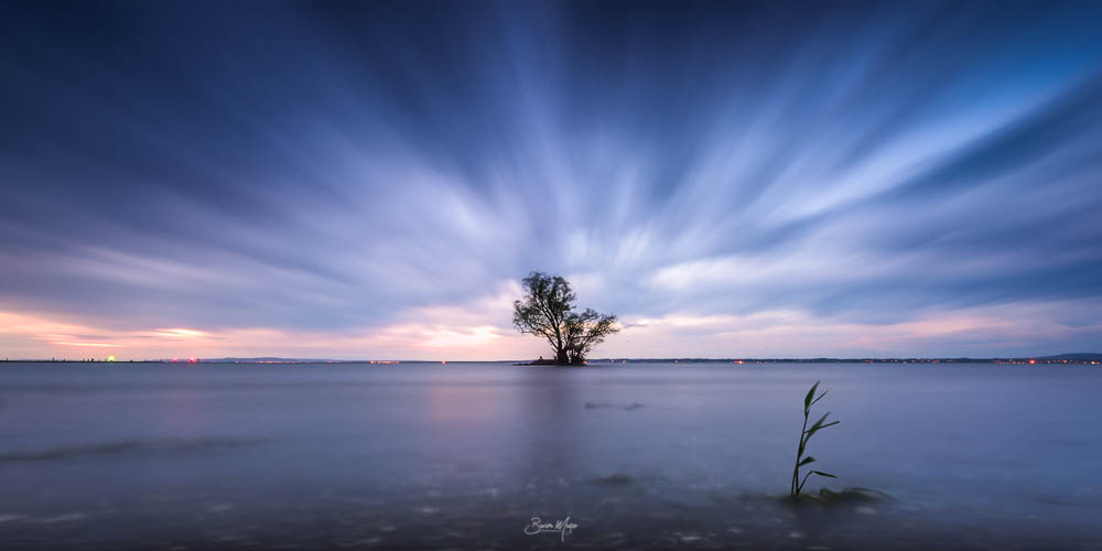 Lonely tree at the lake