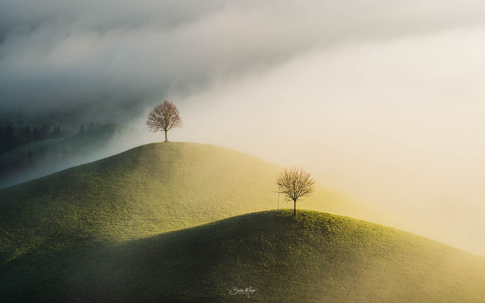 Trees on the hill III